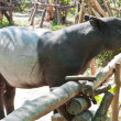 Stock Photo: Malaytapir (tapirus indicus)