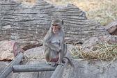 Monkey in a zoo — Photo