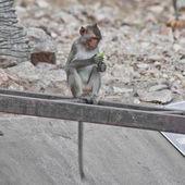 Monkey in a zoo — Stock Photo