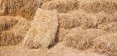 ворс из рисовой соломы — Стоковое фото