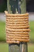 Large rope on bamboo tree — Stock Photo