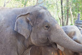 Elephant in a zoo — Stock Photo