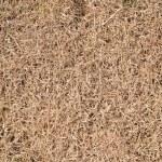 Dry grass — Stock Photo #38550093