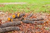 Tree cut down — Stockfoto