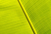 Banana leaves — Stockfoto