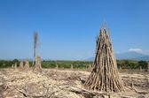 Maniok zagroda wsi tajlandii — Zdjęcie stockowe