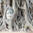 Stone budda head traped in the tree roots. — Stock Photo #39595251
