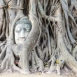 Stock Photo: Stone buddhead traped in tree roots.