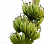 ������, ������: Bananas Galore