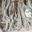 Stone budda head traped in the tree roots. — Stock Photo