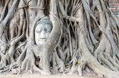 Stone budda head traped in the tree roots. — Stock Photo