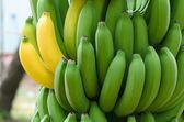 Bananas Galore — Stock Photo