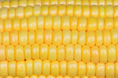 Photo of yellow corn background, abstract backgrounds,  — Stock Photo
