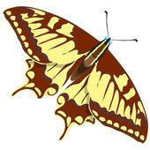Naadloze achtergrond van kleurrijke vlinders. — Stockvector