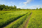 The road through the field. Sunny day. — Stock Photo