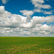 Green fields — Stockfoto