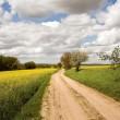 Rape fields with road — Stock Photo