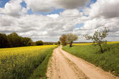 Rape fields with road — Stock Photo