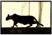 Shadow cat — Stock Photo