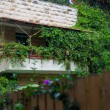 Overgrown green balcony — ストック写真