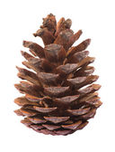 Pinecone on white background — Stok fotoğraf