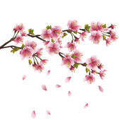 Sakura blossom - Japanese cherry tree — Stock Vector
