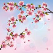 Ljus bakgrund med sakura blossom - japanska körsbärsträd — Stockvektor