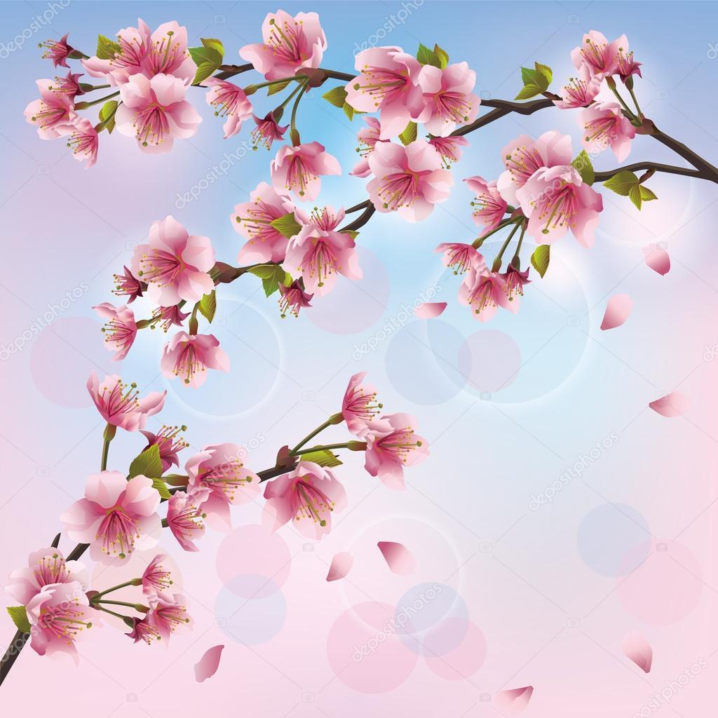Sfondo chiaro con fiore di sakura albero di ciliegio for Sakura albero