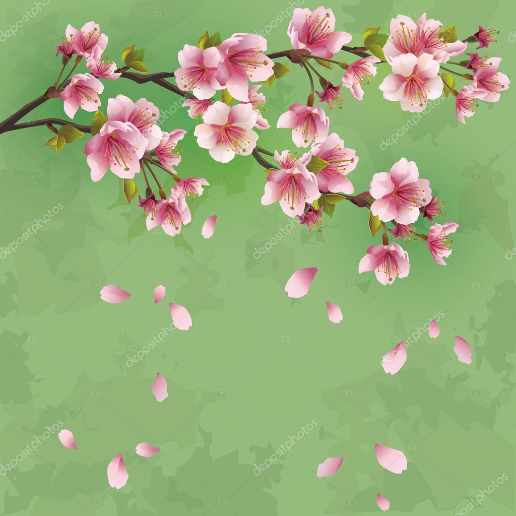 Sfondo grunge con fiori di sakura albero di ciliegio for Albero ciliegio