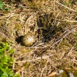 Stock Photo: Seagull nest