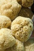 Natural dry porous bath sponge for body care — Stock Photo