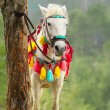 Colorful decorated horse hitched to tree — Stock Photo #22110467