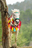 Colorful decorated horse hitched to tree — Stock Photo