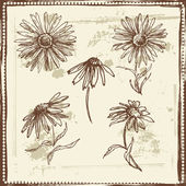 Hand drawn sketch of  daisies — Stock Vector