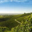 View from above over vineyard landscape — Stock Photo