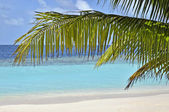 Palm tree over white sand beach in front of blue ocean — Stock Photo