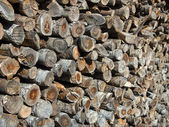 Pile of logs perspective view with shallow depth of field — Stock Photo
