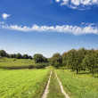 Path through green countryside landscape — Stock Photo