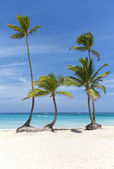 Coconut palm trees on white sand beach in front of ocean — Stock Photo