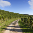 Hiking trail through vineyard landscape in summer - Stock Photo