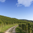 Hiking trail through vineyard landscape in summer — Stock Photo #20448875