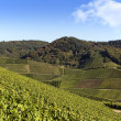 Terraced winegrowing arein verdant landscape. — Stock Photo #21148529