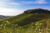 Zelenající vinice krajina a hory v létě — Stock fotografie