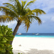 Boats on tropical white sand beach — Stock Photo
