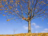 Autumn tree on fallen leaves against blue sky — Stock Photo