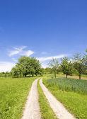 Green grass summer landscape — Stock Photo