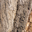 Old Tree Wood Texture Background Pattern  — Stock Photo