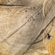 Tree stump wood texture — Stock Photo