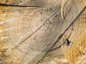 Tree stump wood texture — Stock Photo
