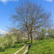Hiking path through green rural spring landscape — Stock Photo
